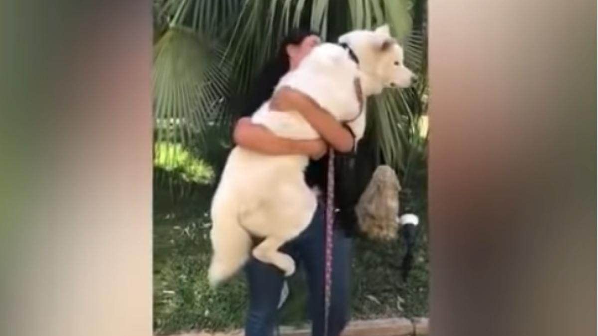 YouTube: Después de la explosión de Beirut decenas de mascotas se reencuentran con sus propietarios