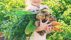 Cuáles son las mejores frutas y verduras que ofrecer a los niños en verano