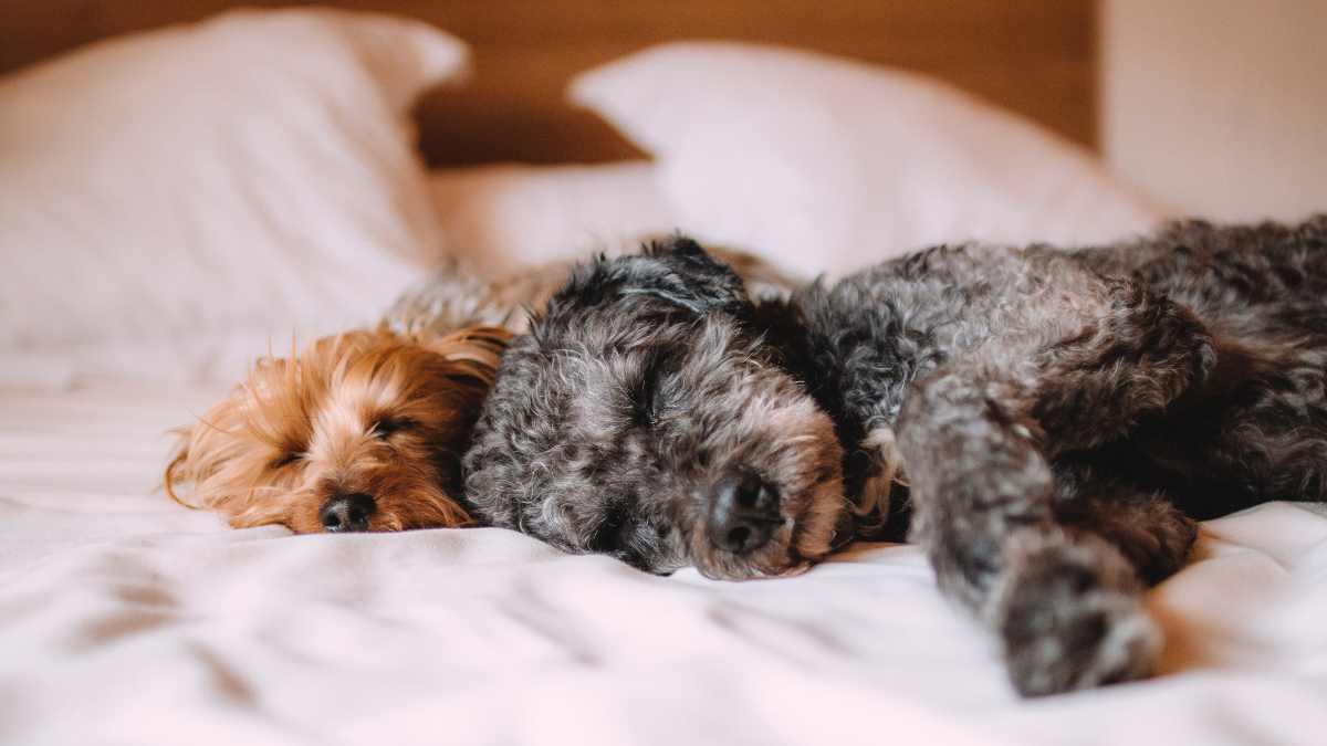 ¿Cómo descansa tu perro?