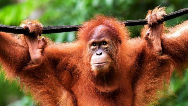 5 animales en peligro de extinción que desaparecerán en 30 años