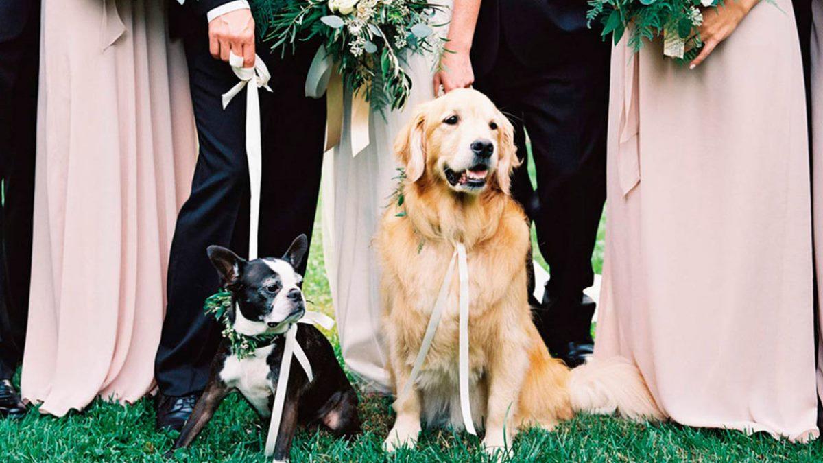 Las mascotas pueden formar parte de un día tan especial para la familia