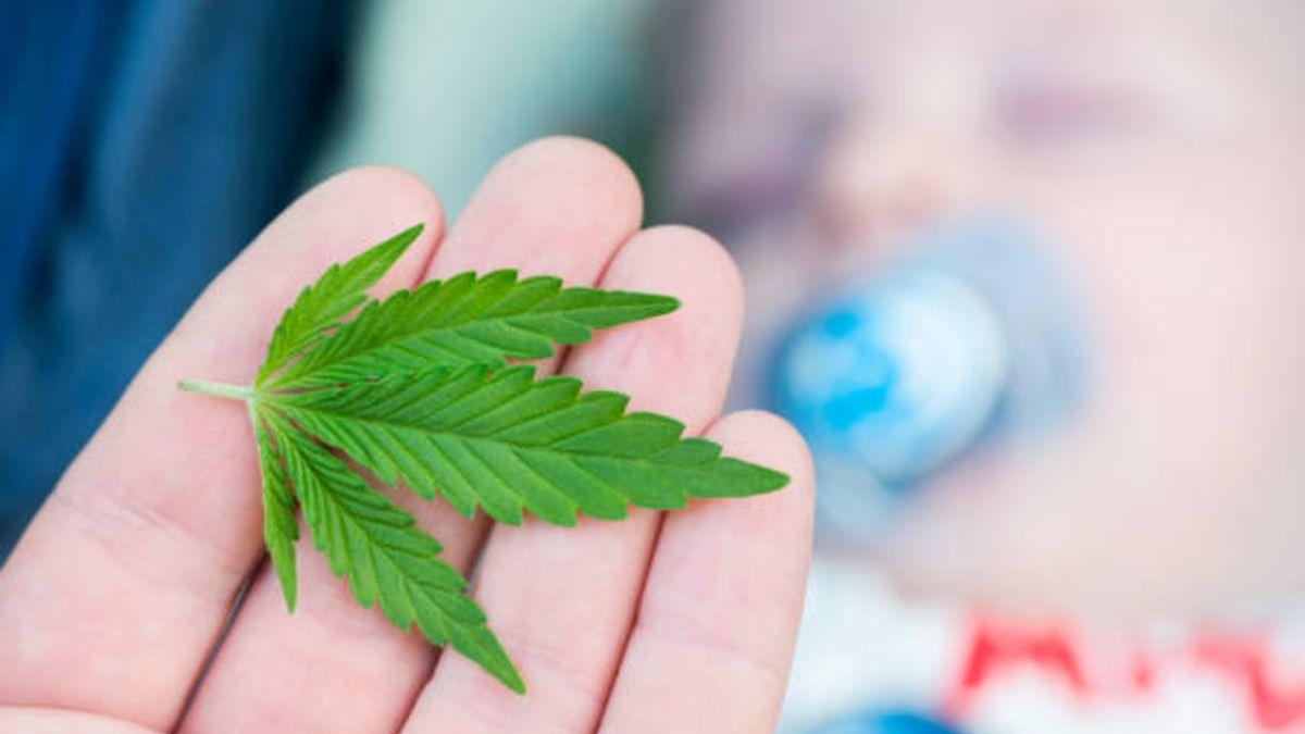 Nueva York permitirá a cada habitante tener hasta seis plantas de marihuana para consumo personal.