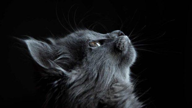 Respiración anormal en gato