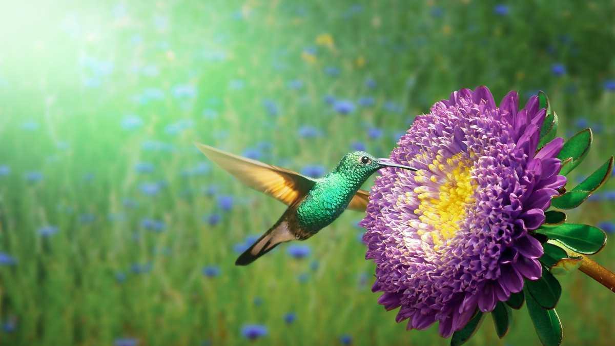 Aves se alimentan de néctar