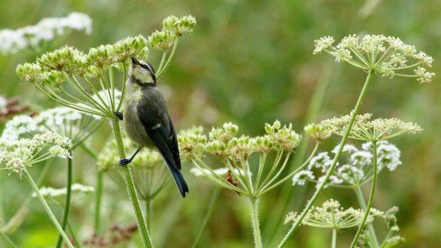 Aves toman néctar flores