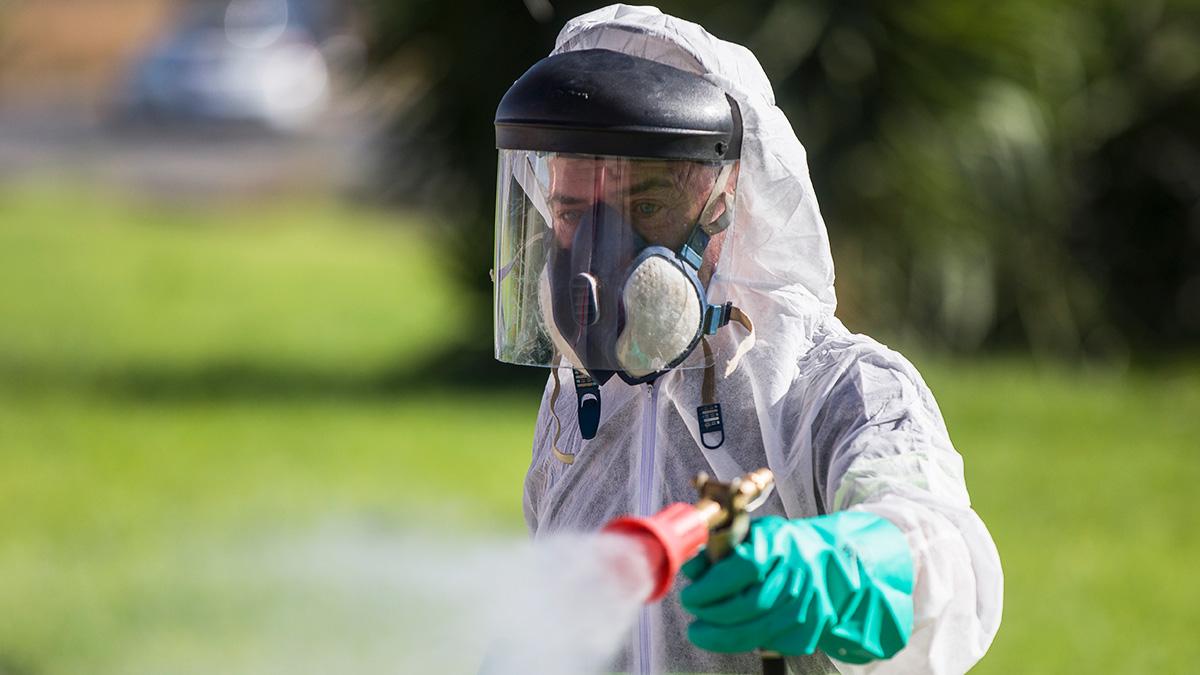 El virus del Nilo ya ha llegado a Sevilla capital y podría seguir propagándose