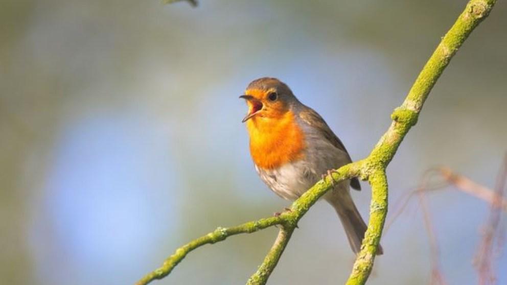 Frases sobre pájaros