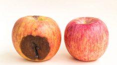 Comerse una manzana podrida aunque quitemos lo feo ¿es un riesgo para nuestra salud?