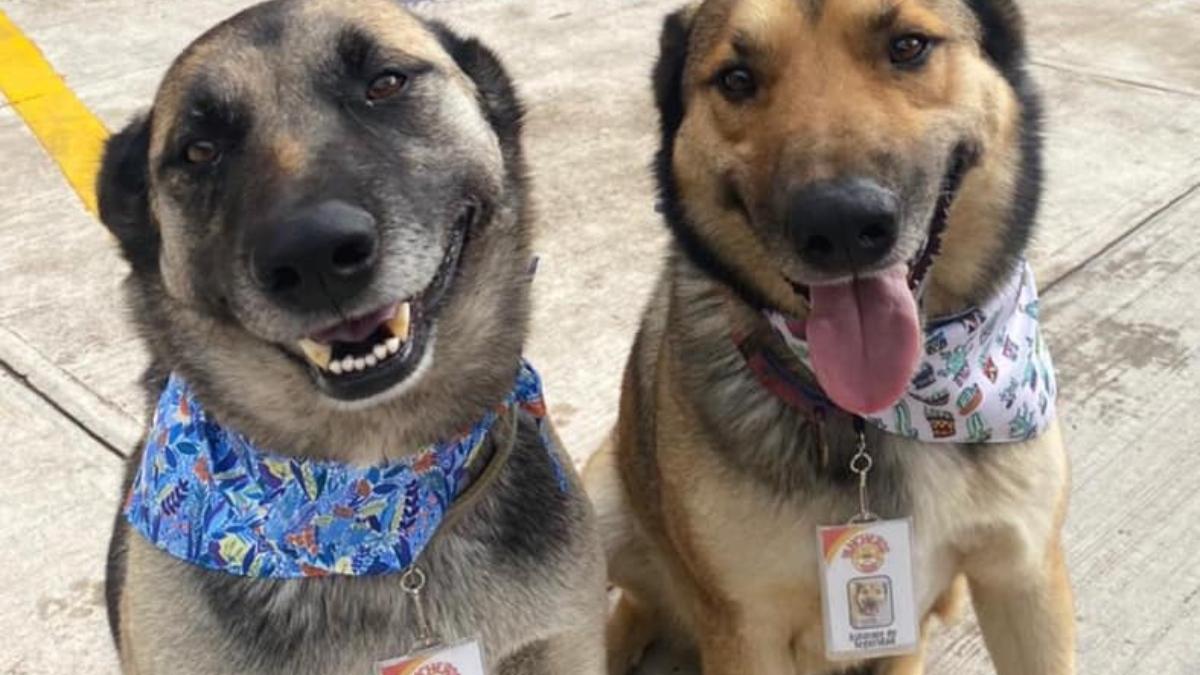 Facebook: 'Costilla' y 'Adobada' son dos perritas adoptadas que trabajan en un restaurante