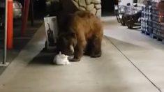 Facebook: Un oso entra en un supermercado y roba una bolsa de patatas fritas