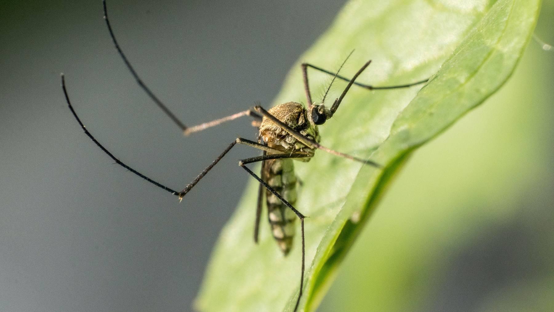 6 trucos eficaces contra los mosquitos