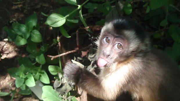 Primates chinos