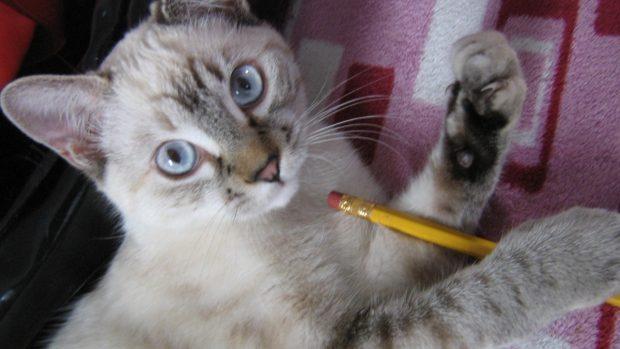 Juegos de tu gato
