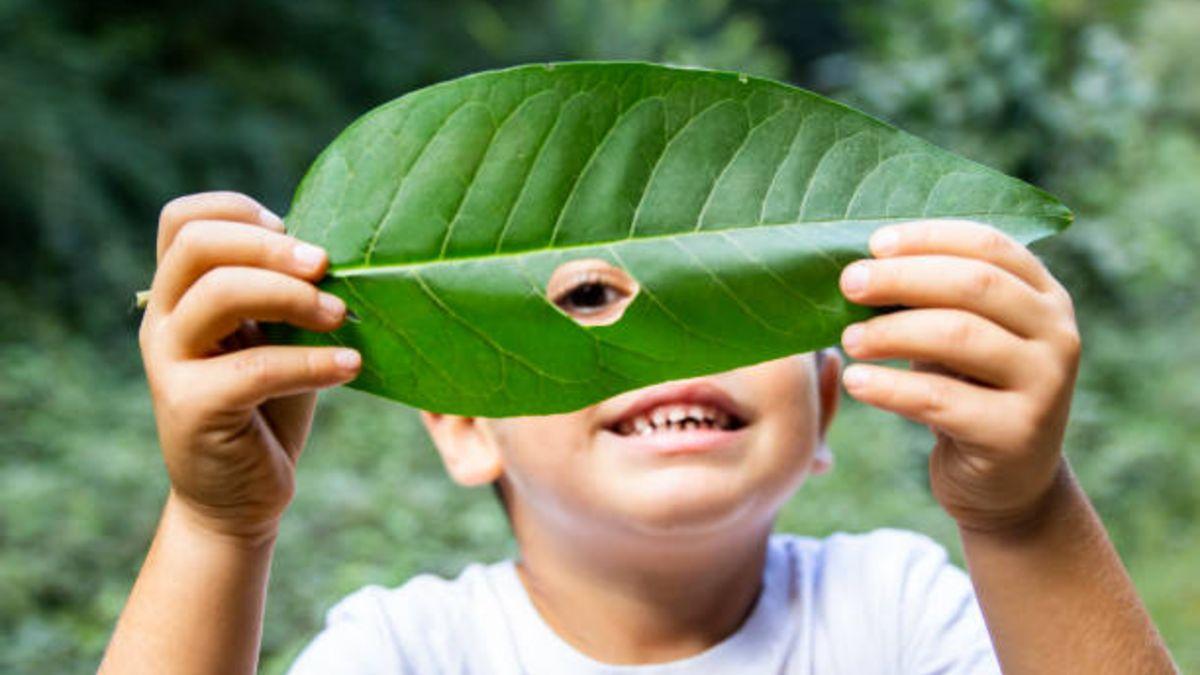 Descubre el estudio que ha revelado que crecer en un entorno verde hace que los niños sean más inteligentes