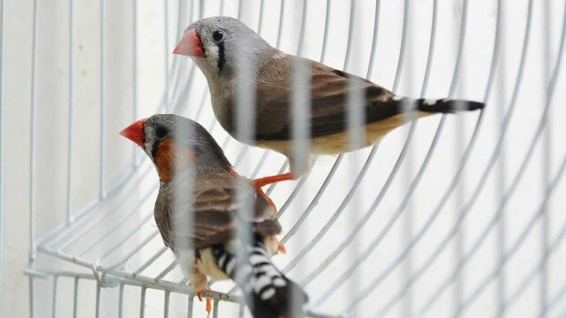Pájaros en jaulas