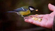 Horas de comer de tus pájaros