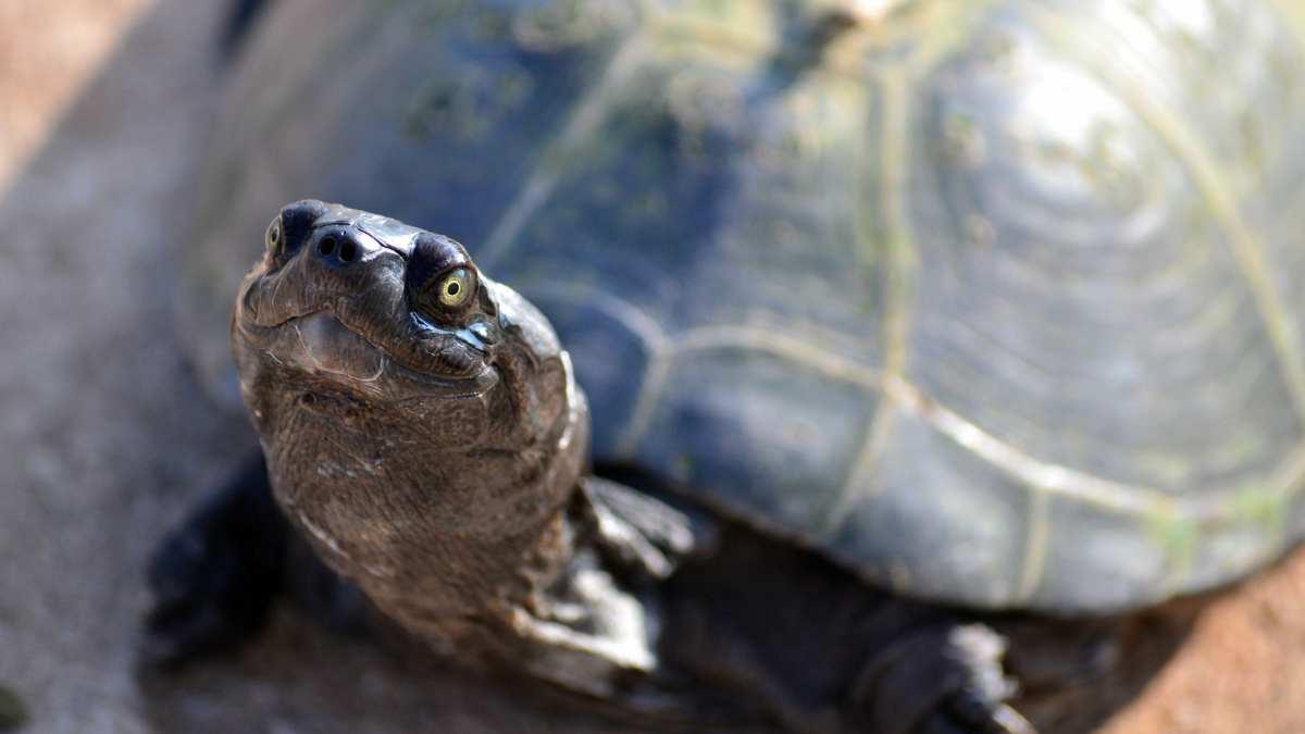 Los cuidados de tu tortuga doméstica