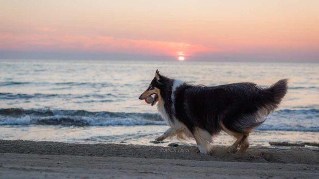 Perro en verano