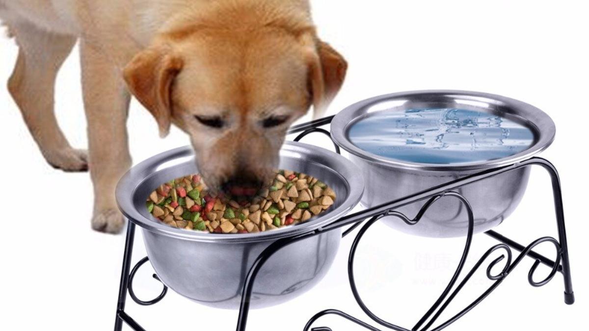 Platos elevados en tu perro