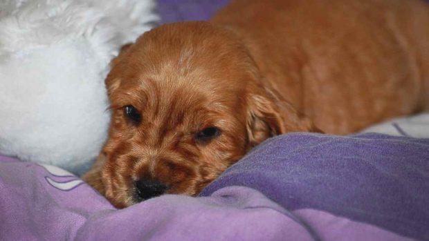 Espacio para que tu perro duerma