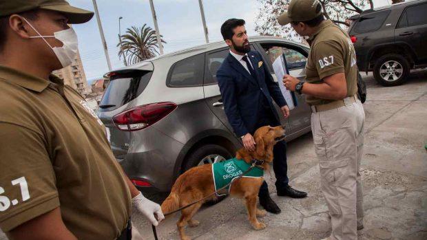 Entrenamiento de perros antidrogas