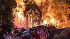 En libertad los presuntos autores del incendio de Estepona que calcinó negocios y hasta un centro comercial.
