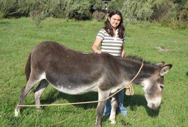 Terapia con burros