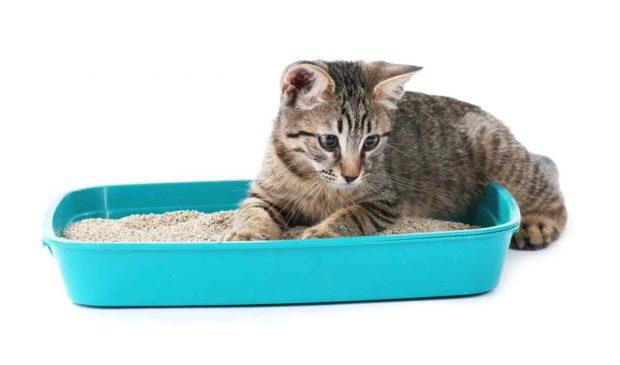 Arenero de tu gato