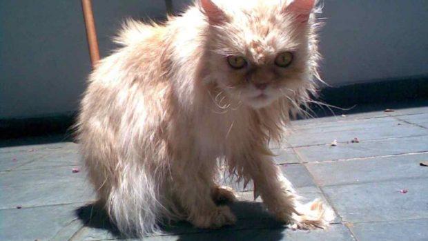 Baño a gato