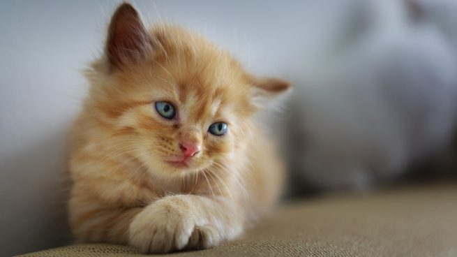 Cómo saber si tu gato está triste
