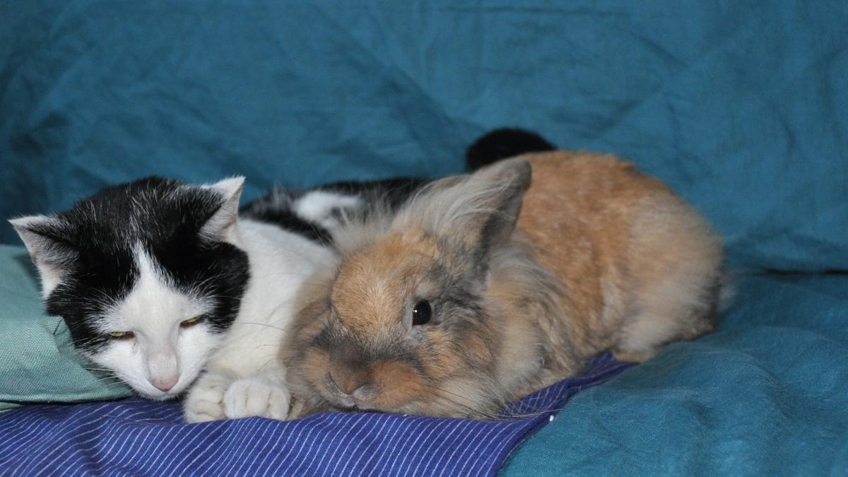 Cómo mejorar la convivencia entre gatos y conejos