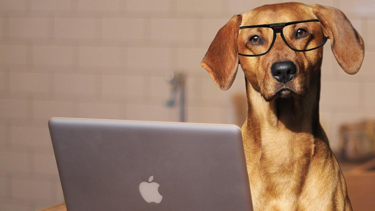 Películas ver con tu perro (1)