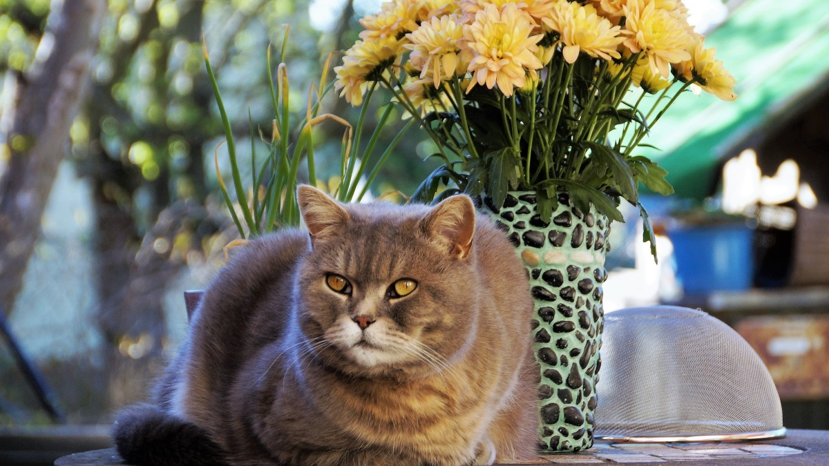 Por qué debes tener un gato en casa según el feng shui