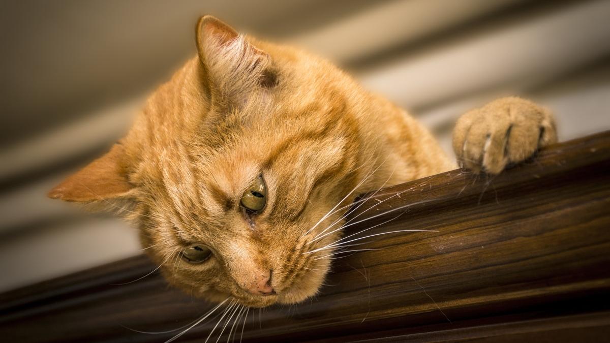 Qué hacer si tu gato no quiere usar el arenero