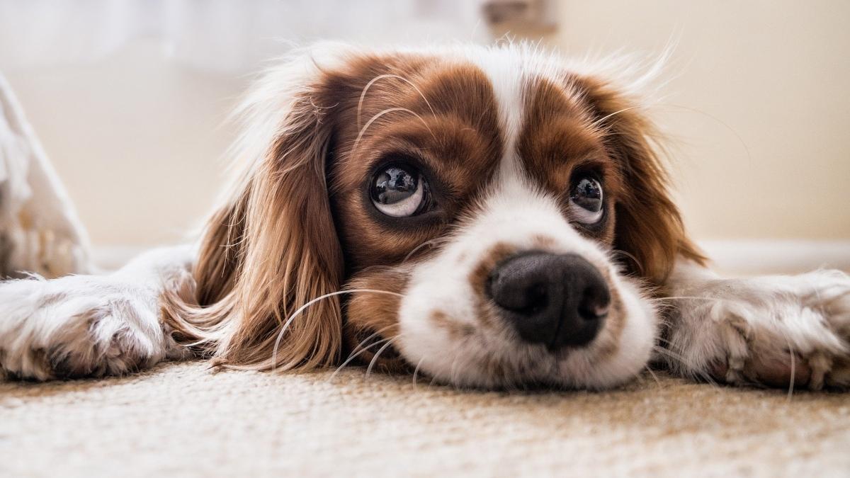 Esta comida podría provocarle a tu perro un infarto
