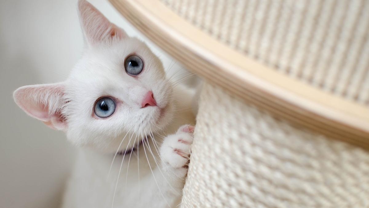 Estos son los 5 tipos de propietarios de gatos que existen