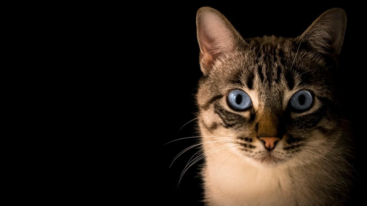 Cómo jugar de forma segura con tu gato