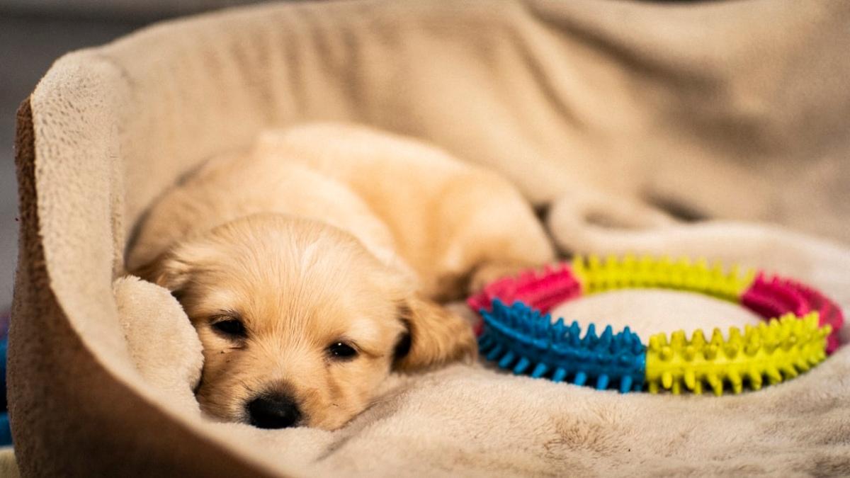 Estos son los mejores juguetes para perros