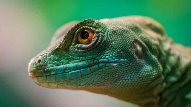 Enfermedades reptil