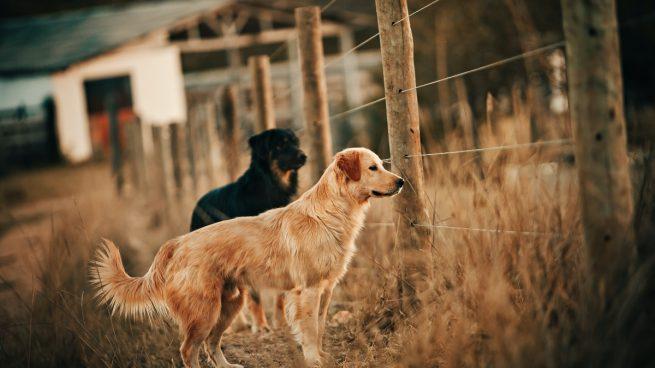 Elige valla para tu perro