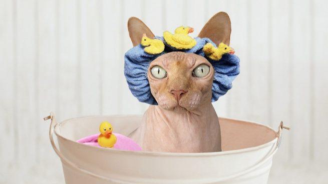 Receta de champú antipulgas para gatos casero