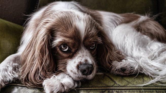 Estas son las infusiones que podrás compartir con tu perro