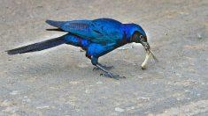 Pájaros e insectos