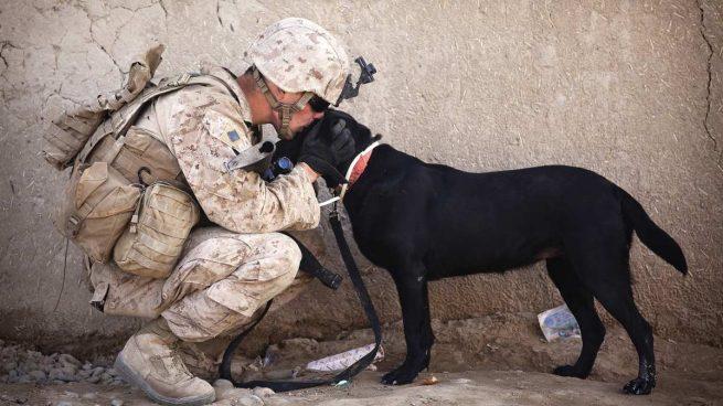 Perros guerras mundiales