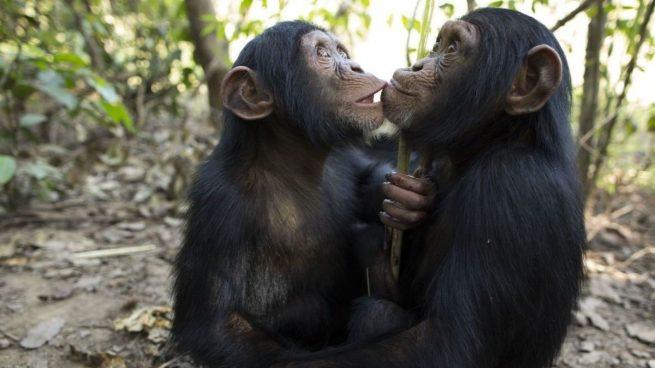 Los embarazos animales más sorprendentes que existen en el mundo