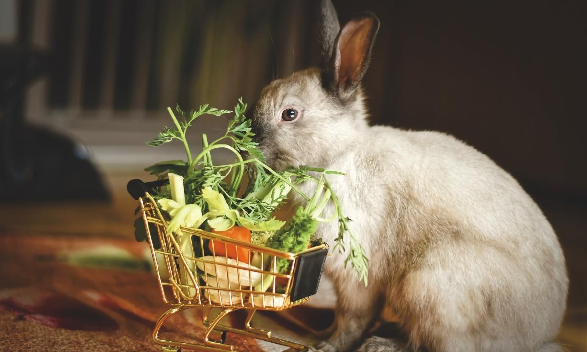 Qué dar de comer a un conejo doméstico