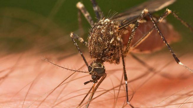 Confirmado un nuevo caso del virus del Nilo en Sevilla