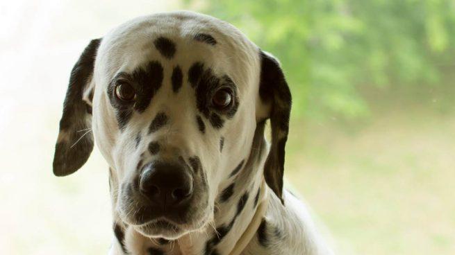 Miedo en tu perro