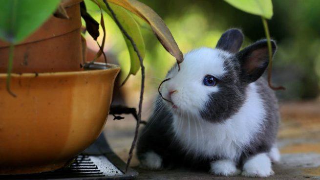 Conejo en planta