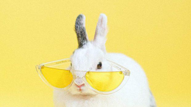 Conejo con gafas